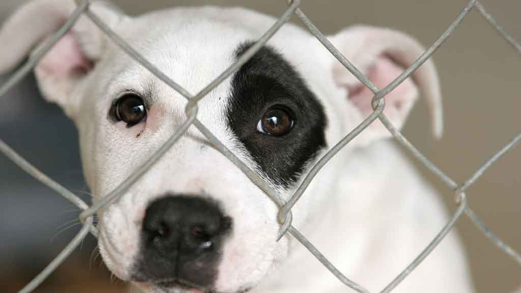 Puppy farms - Pets - CHOICE