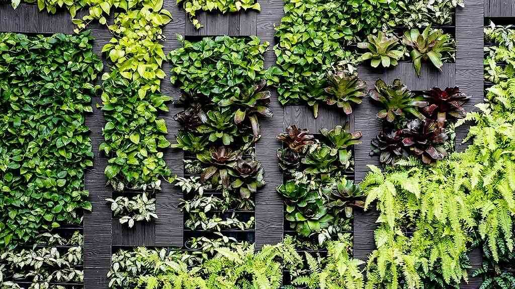 How to grow a vertical garden at home - CHOICE
